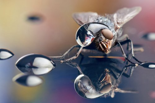 insects and water hat fastcodesign.com